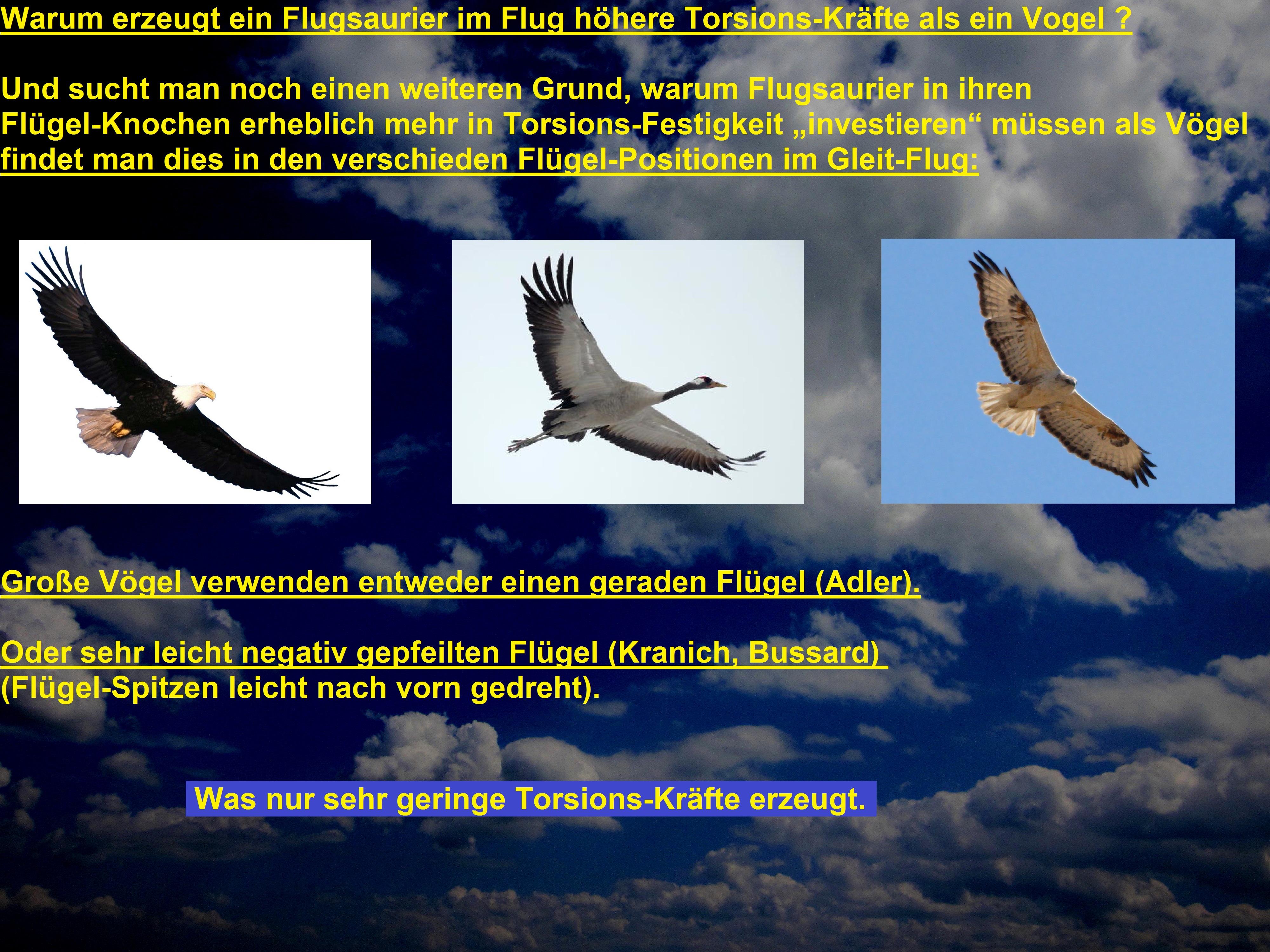 vögel bestimmen leicht gemacht